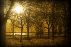 Textured Image of Sun Shining Through Trees Royalty Free Stock Image