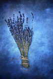 Textured Lavender Royalty Free Stock Images