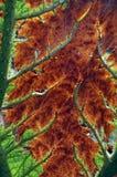 Textured Leaf Stock Photo