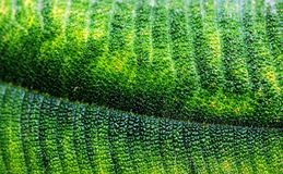 Textured Leaf Stock Image