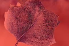 Textured leaf with drops in color of living coral. Beautiful dropped leaf in color of living coral stock photo