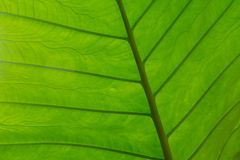 Textured Leaf Macro background in vibrant green royalty free stock photography
