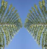 Textured leafs. Symmetric palm leafs against blue sky stock photos