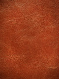 Textured leather background Stock Image