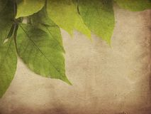 Textured leaves Royalty Free Stock Images