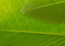Textured liścia Makro- tło w wibrującej zieleni Zdjęcie Stock