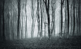 Textured monochrome foggy mystic forest Stock Photo