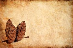 Textured old grunge paper background with pine cones Stock Photography