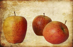 Textured old paper. Background with red apples with dry leaves stock images