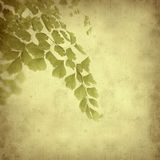 Textured old paper background. With fern Royalty Free Stock Photos