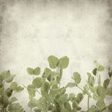 Textured old paper background. With young pea plants horizontal border Stock Images