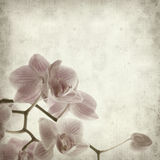Textured old paper background. With abundant flowering of pink stripy phalaenopsis orchid Royalty Free Stock Photos