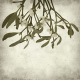 Textured old paper background. With Mistletoe with white berries Stock Photography