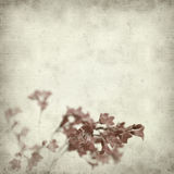 Textured old paper background. With small pink heuchera flowers Royalty Free Stock Photos