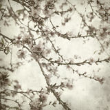 Textured old paper background. With almond blossoms Royalty Free Stock Photos