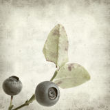 Textured old paper background. With bilberry Royalty Free Stock Photos
