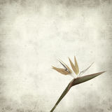 Textured old paper background. With bird of paradise flower Royalty Free Stock Photography