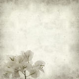 Textured old paper background Stock Image