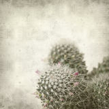 Textured old paper background with cactus Royalty Free Stock Image