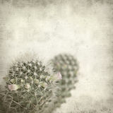 Textured old paper background with cactus Royalty Free Stock Photo