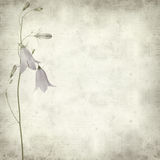 Textured old paper background. With campanula, bellflower Stock Photo