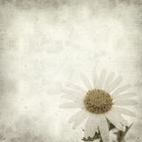 Textured old paper background. With canarian marguerite daisy royalty free stock images