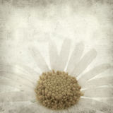 Textured old paper background. With canarian marguerite daisy royalty free stock photo