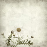 Textured old paper background. With canarian marguerite daisy stock photography