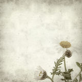 Textured old paper background. With canarian marguerite daisy stock images
