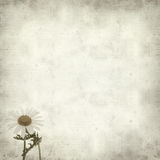 Textured old paper background. With canarian marguerite daisy royalty free stock photography