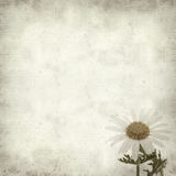 Textured old paper background. With canarian marguerite daisy stock photos
