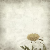 Textured old paper background. With canarian marguerite daisy stock photo