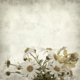 Textured old paper background. With canarian marguerite daisy stock image