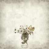 Textured old paper background. With canarian marguerite daisy royalty free stock photos