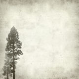 Textured old paper background. With canarian pine trees Royalty Free Stock Photos