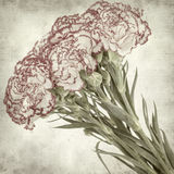 Textured old paper background. With carnation flower Stock Photos