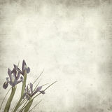 Textured old paper background. With dark pirple iris flowers Stock Images