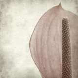 Textured old paper background. With exotic anthurium flower Stock Photography