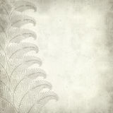 Textured old paper background. With fern illustration Royalty Free Stock Photo