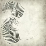 Textured old paper background. With fern leaves illustration Royalty Free Stock Photos