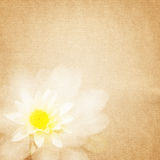 Textured old paper background with flower Stock Image