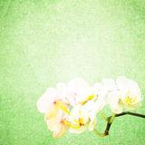 Textured old paper background with flower Royalty Free Stock Images
