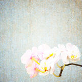 Textured old paper background with flower Stock Photos