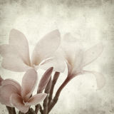 Textured old paper background with Royalty Free Stock Images