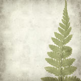Textured old paper background. With green fern leaf Stock Images