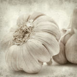 Textured old paper background. With large garlic bulb stock image