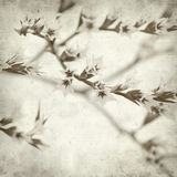 Textured old paper background. With limonium flowers Royalty Free Stock Images