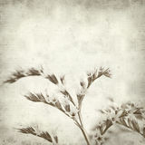 Textured old paper background. With limonium flowers Stock Image