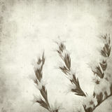 Textured old paper background. With limonium flowers Stock Photos