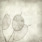 Textured old paper background. With Lunaria annua, silver dollar plant Royalty Free Stock Images